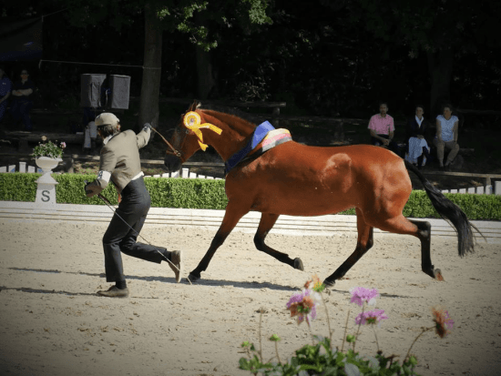 Internationales Lusitano Festival