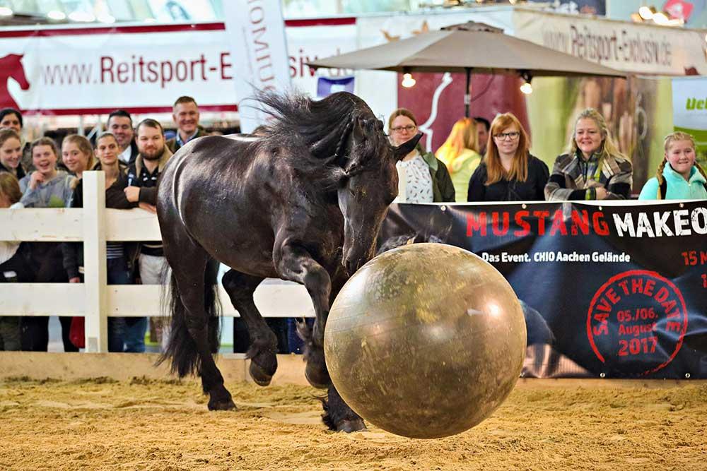 Pferd & Jagd, Andrea Schmitz