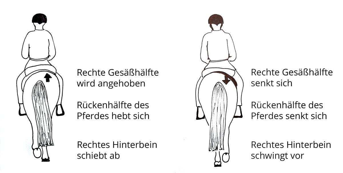 Feldenkrais für Reiter