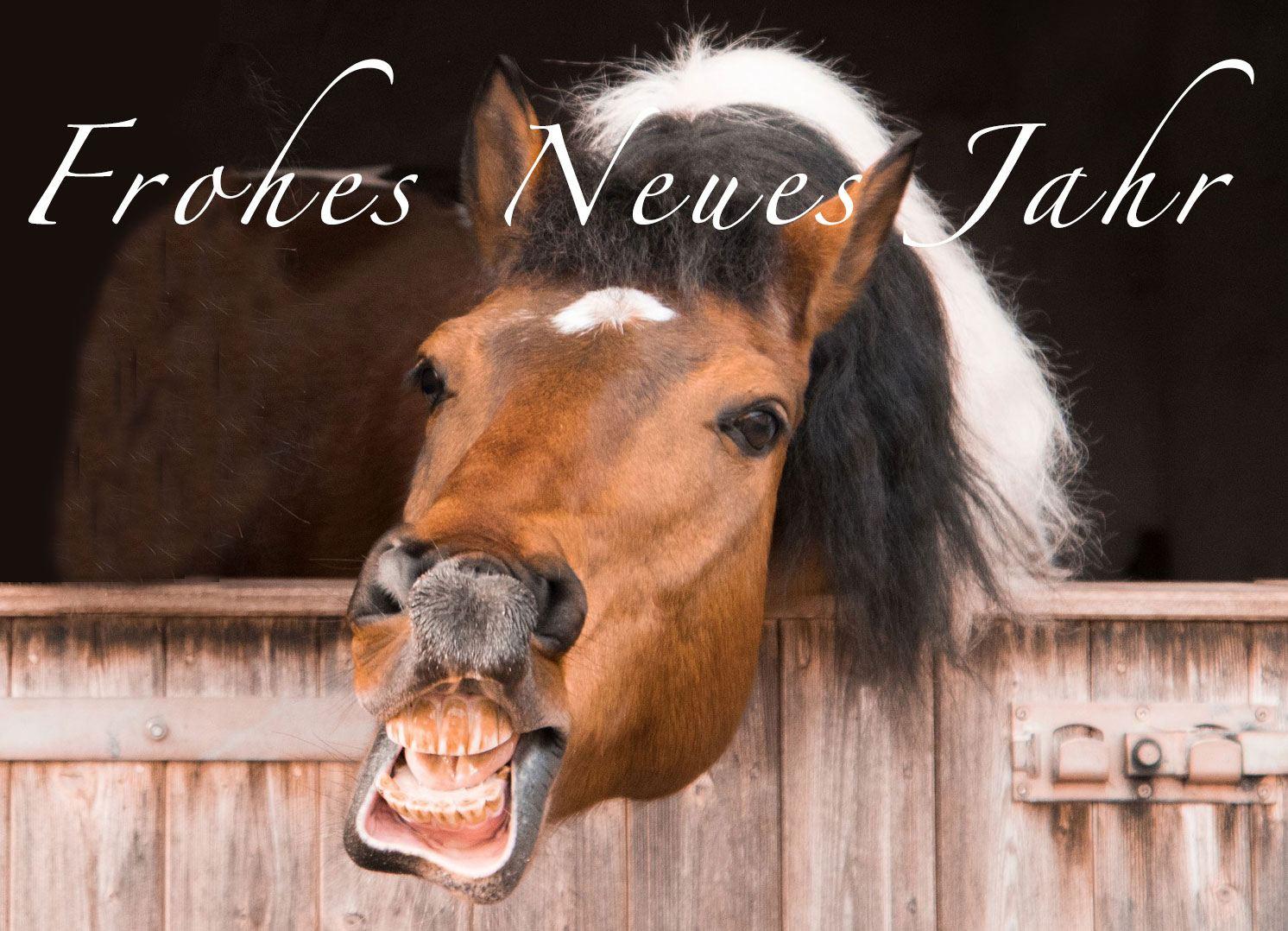 silvester und pferde