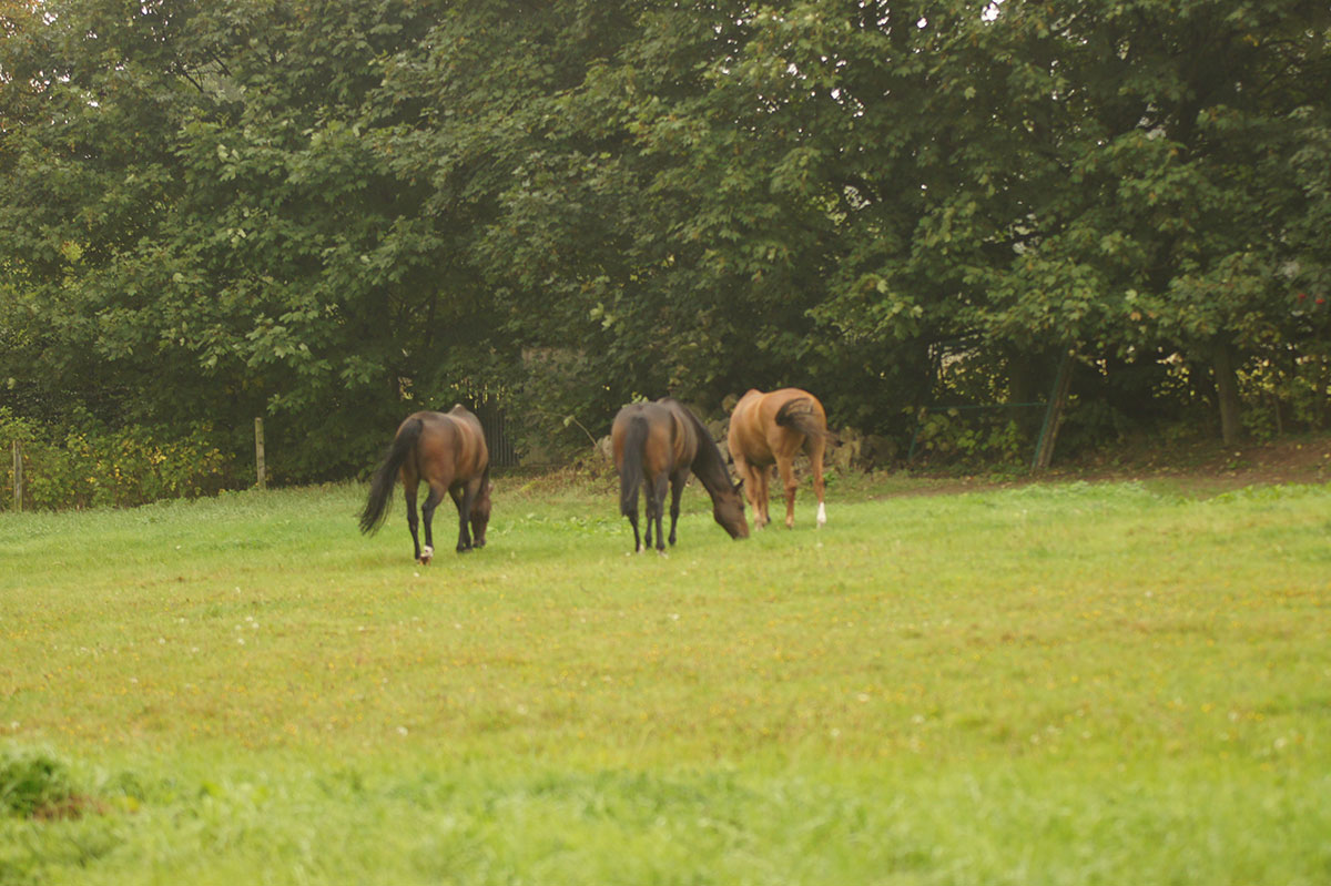 Pferde und Weide