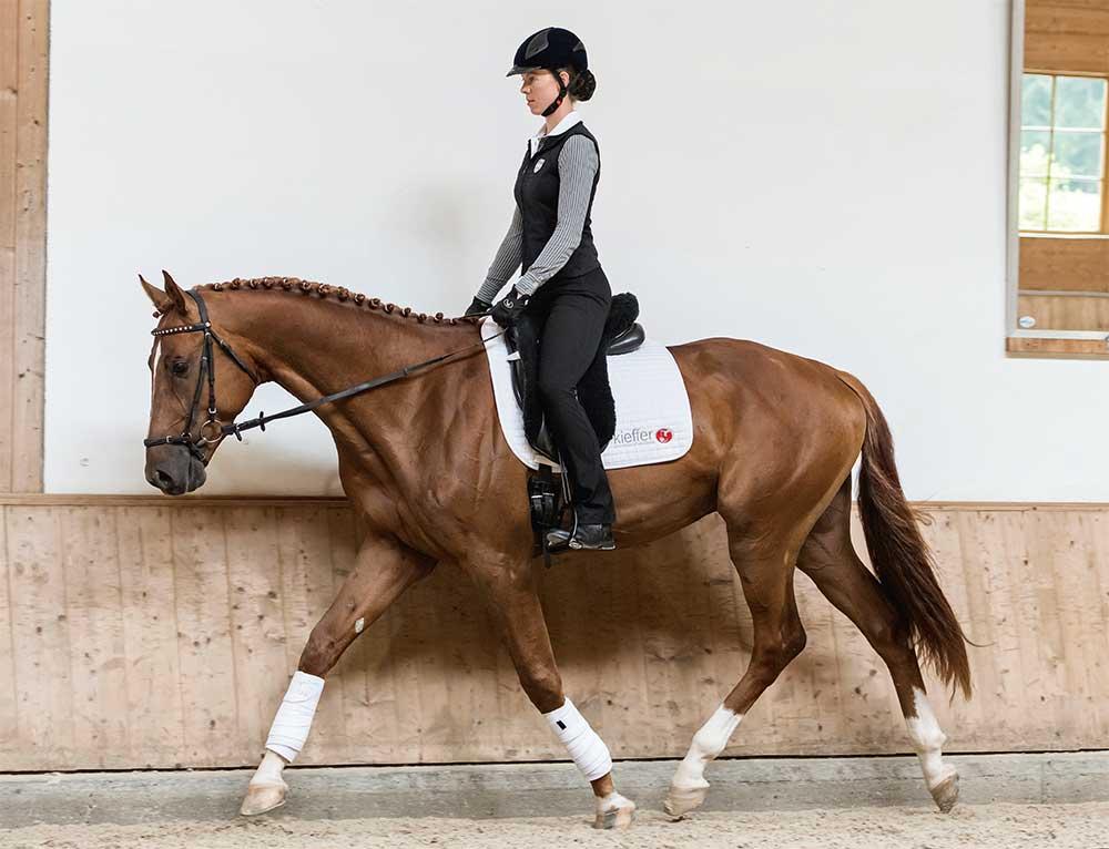 Anja Beran, Ausbildung Remonte, Junge Pferdeausbildung