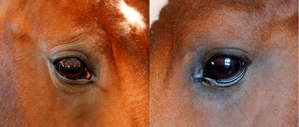 Sorgenfalten beim Pferd