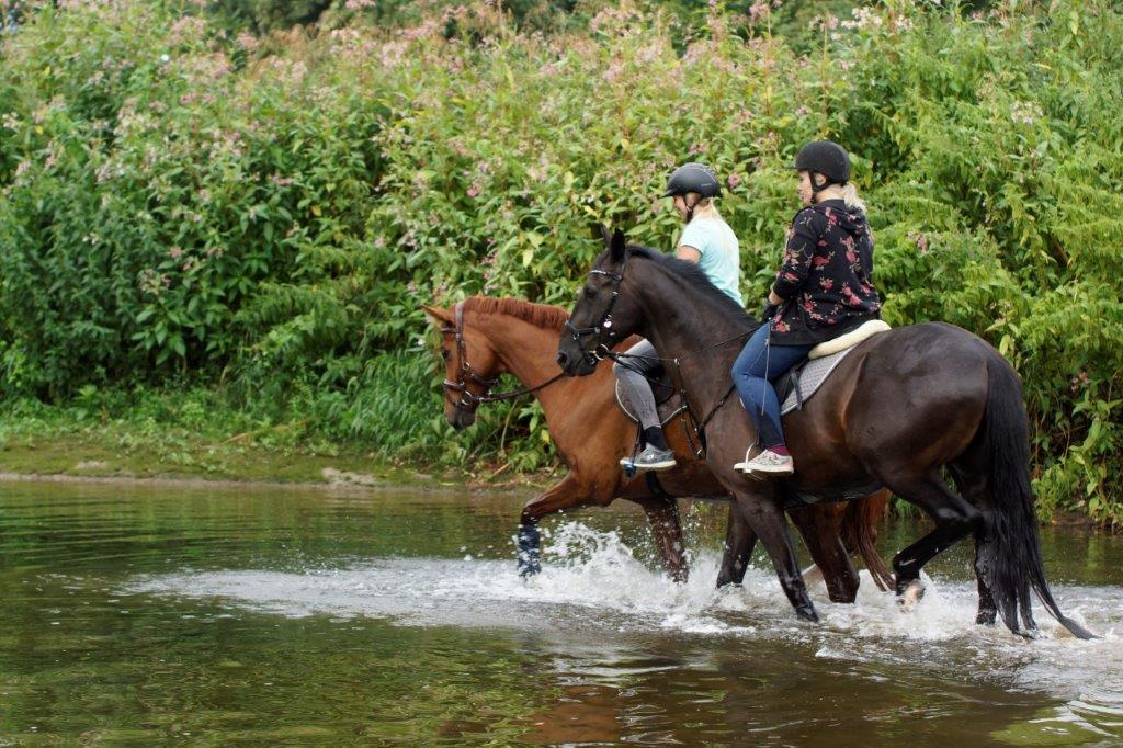 Hitze, Reiten, Pferde, Hitzeschlag
