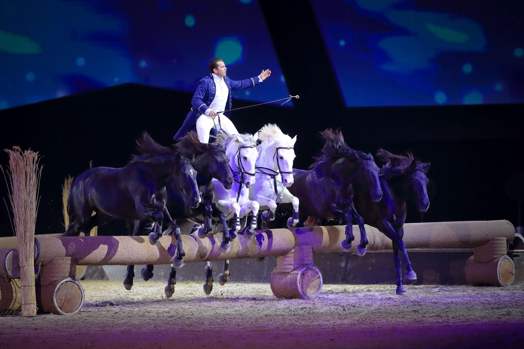 Lorenzo aus Frankreich, Lorenzo aus Frankreich, Pferd & Jagd
