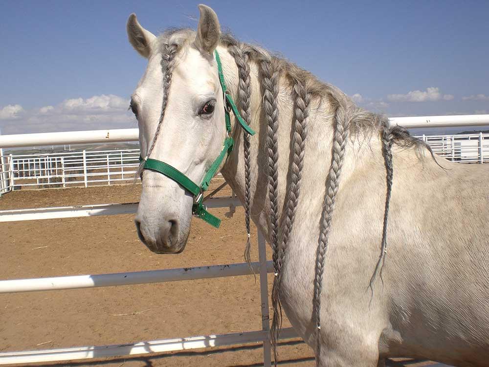 Top 5 Der Beliebtesten Pferdefrisuren Seitliche Hängezöpfe