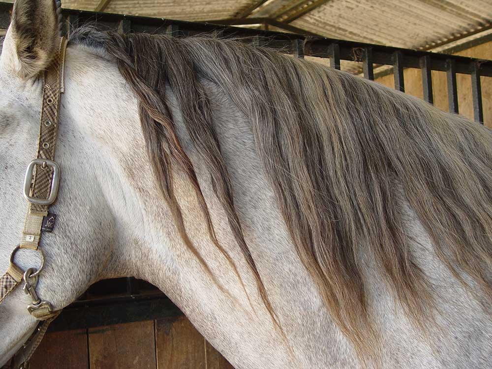 10++ Mittlere frisur pferd inspiration
