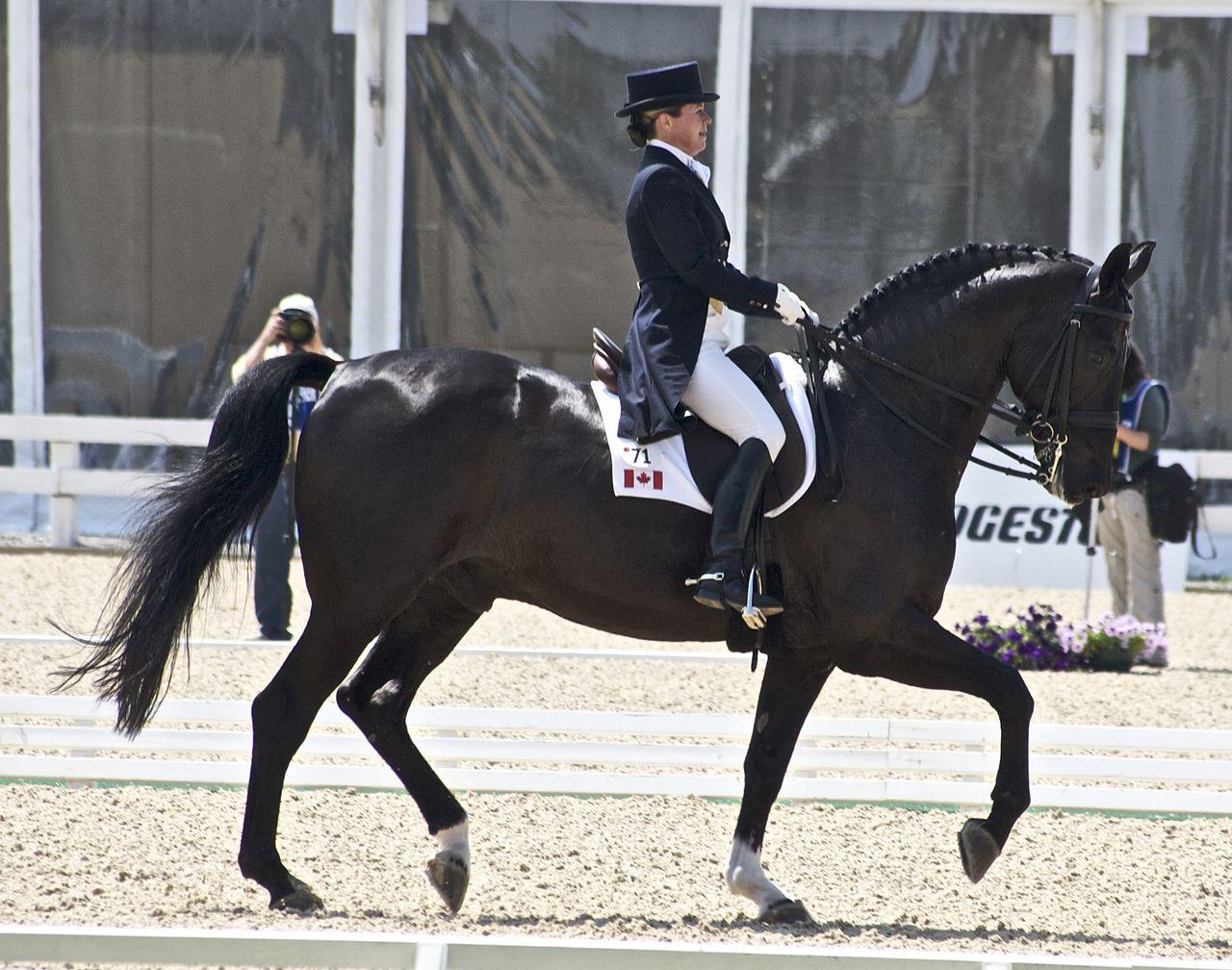 Altwürttemberger Pferd