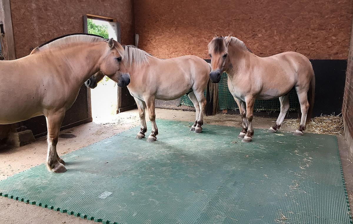 Stallmatten im Pferdestall
