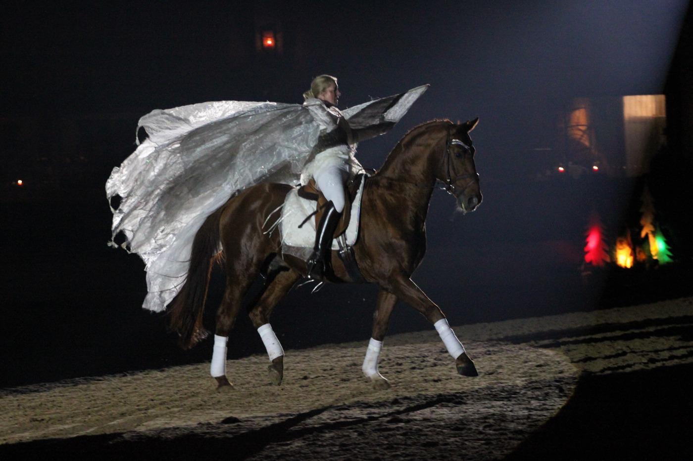 Gala-Abend des Pferdes