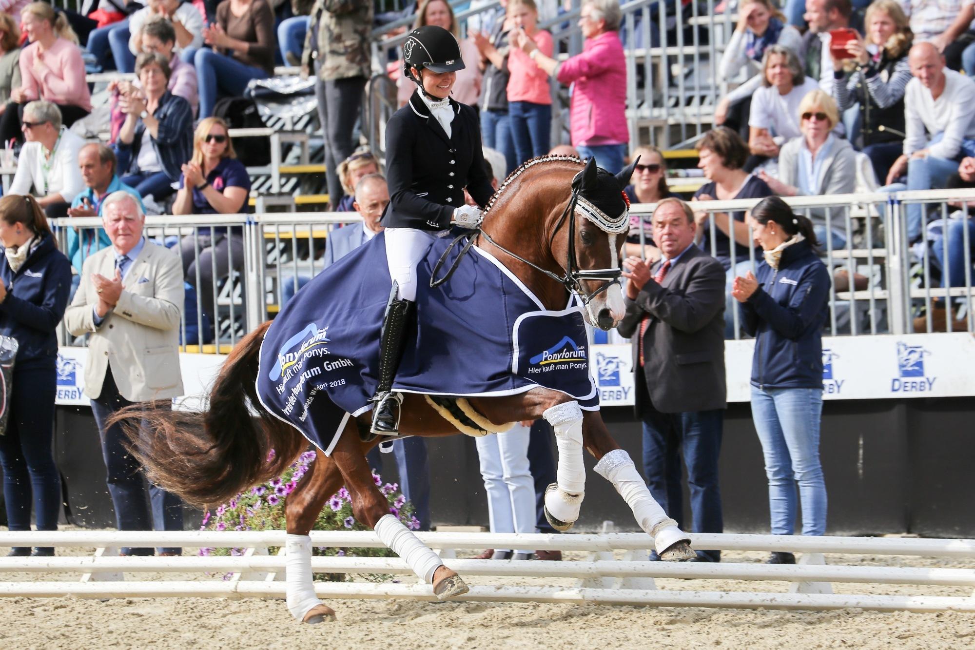 Die erfolgreichsten Züchter von Nachwuchsreitpferden und -ponys